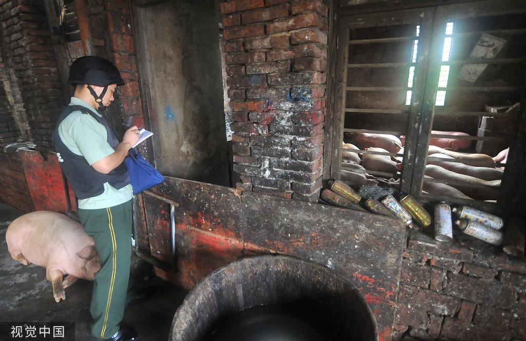 2014年6月30日,浙江玉环,执法人员捣毁一处生猪屠宰黑窝点。图/视觉澳门二十一点游戏
