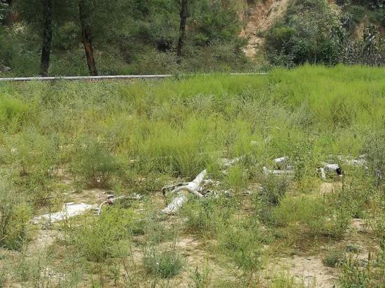 健身器材埋没在簇新的蒿草中。