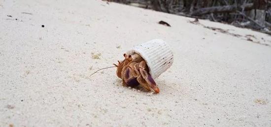"""看到太平洋海滩上这一幕 网友""""既惊吓又心酸"""""""