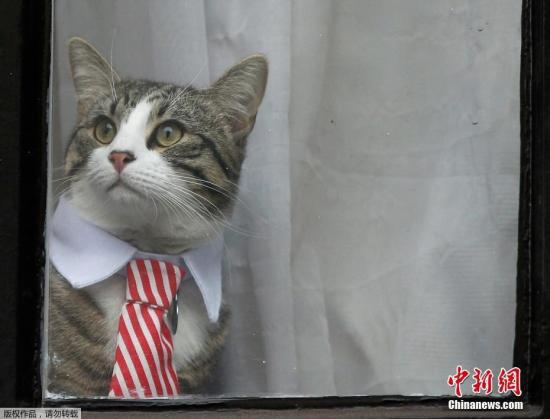 """资料图:""""维基解密""""网站创始人阿桑奇的宠物猫。"""
