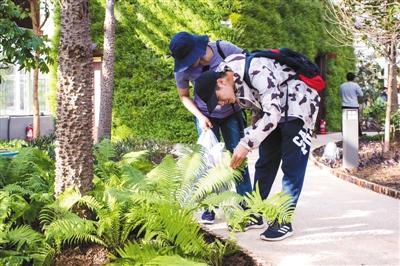 世园会百草园,游客正在观赏中草药植物。受访者供图