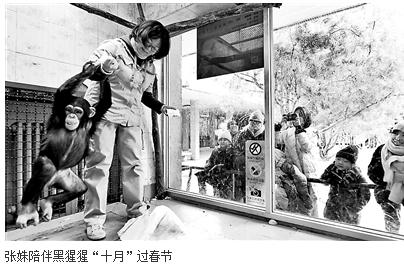"""育幼师陪小动物过春节 """"破儿五""""给黑猩猩包饺子"""