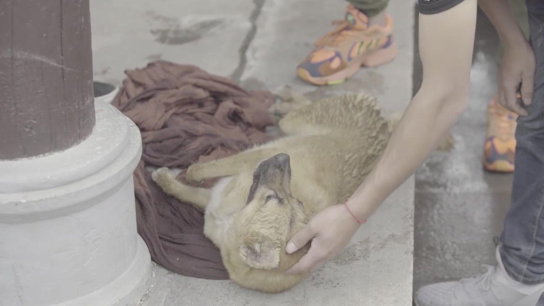 电视剧《孤城闭》否认拍戏虐狗:倒地是因为提前打了麻醉