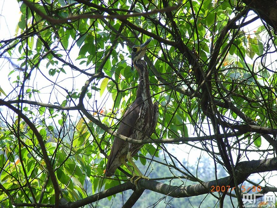 【图集】走进原始森林 探索南岭奇妙物种