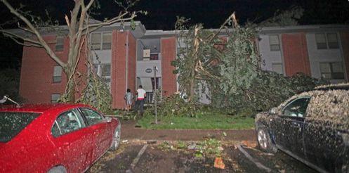 ▲大树倒塌(图源:CNN)