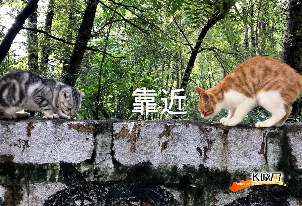 """灰灰和黄黄的""""猫村""""爱情故事"""
