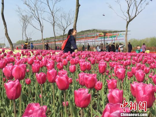 安徽芜湖:搭乘长三角一体化发展快车 乡村旅游火热