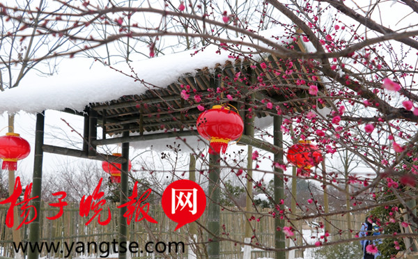 【新春走基层】句容茅山:赏国花