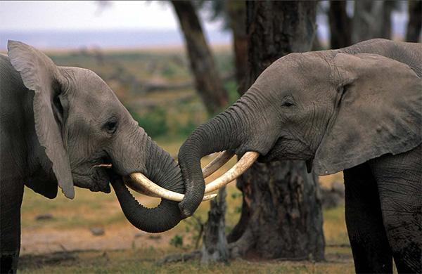 WWF供图 供图