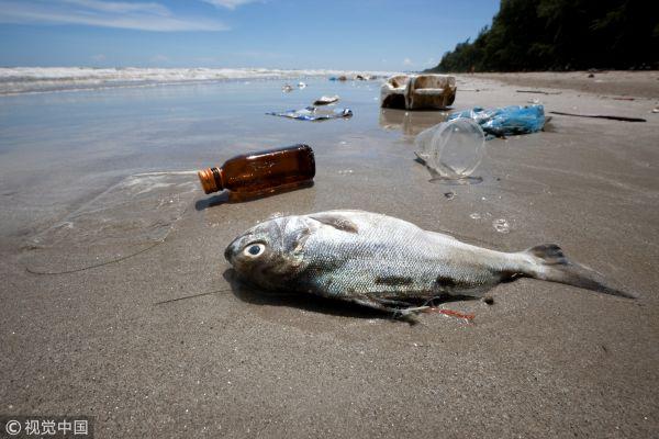 台媒:欧盟通过塑料禁令 将禁用一次性塑料产品