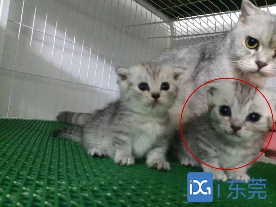 花万元买回病猫,治疗又花了近万元…