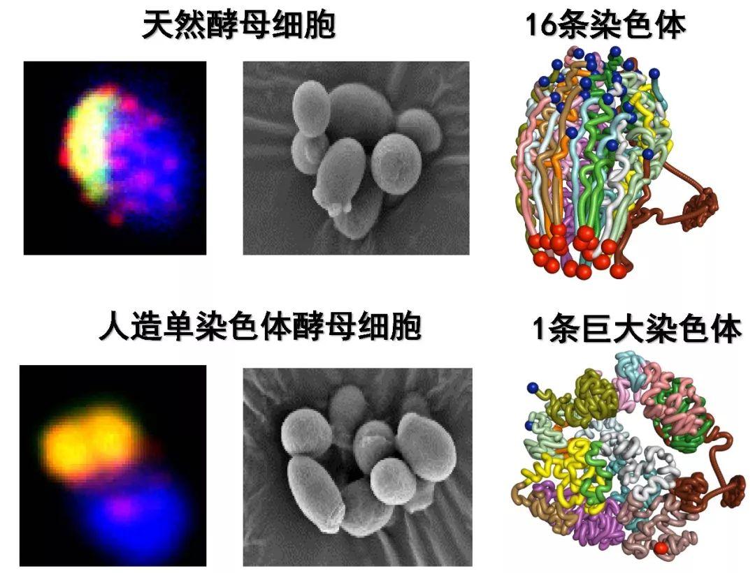 中国一重磅成绩单发布 克隆猕猴DNA机器人都在列