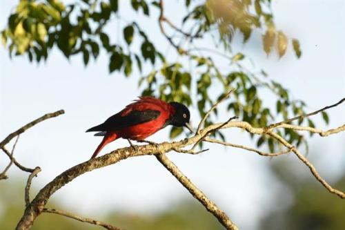 探访台湾首座平地森林园区:濒危鸟类10年增