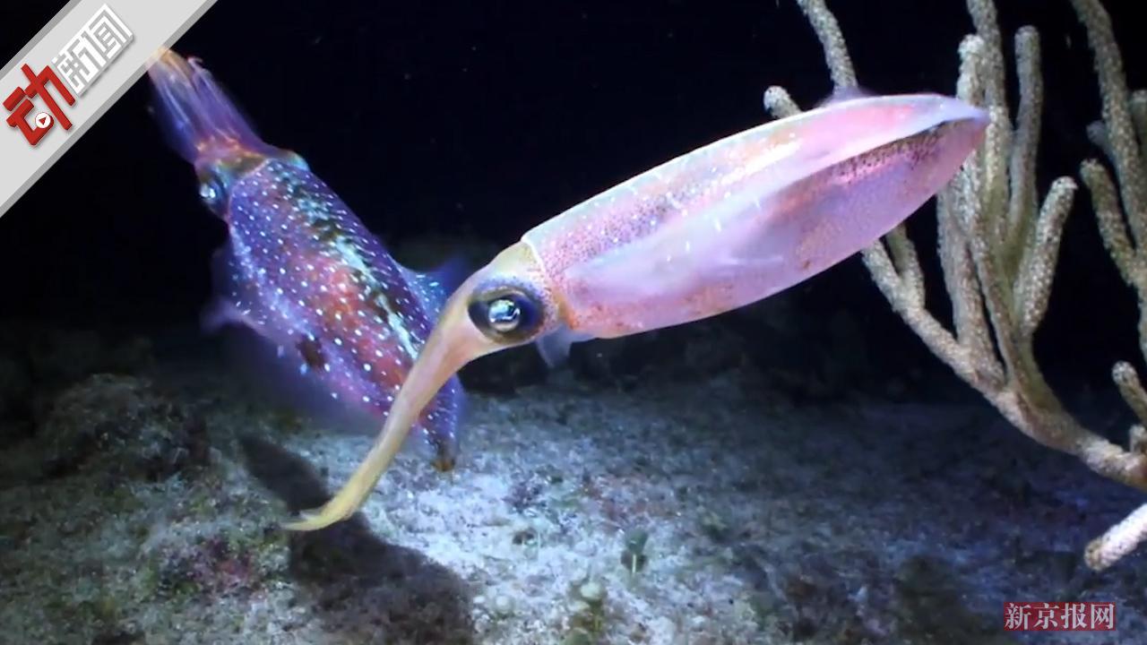 鱿鱼体内蛋白质或可替代塑料 研究者:此蛋白能人工合成