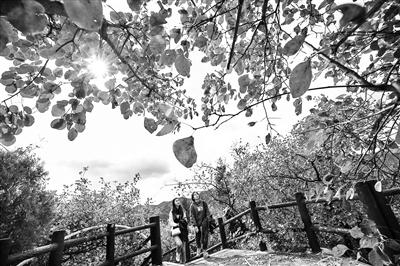 【个性搞笑名字】北京推21处彩叶观赏景区 15家公园承诺为秋景留叶