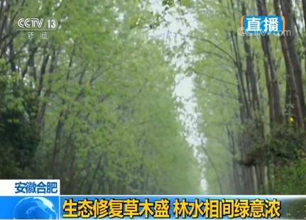 安徽合肥:生态修复草木盛 林水