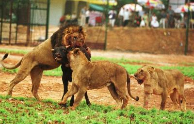 图文:武汉森林野生动物园开园