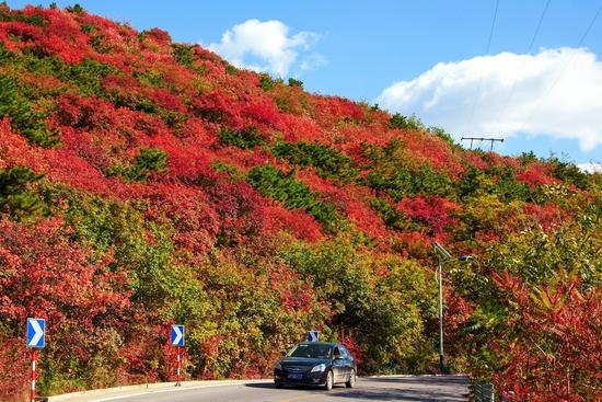 京城赏秋不必扎堆儿香山,这20处赏红片区等您来