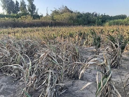 台湾部分地区连续2年现旱象 50年一遇旱情恐重演