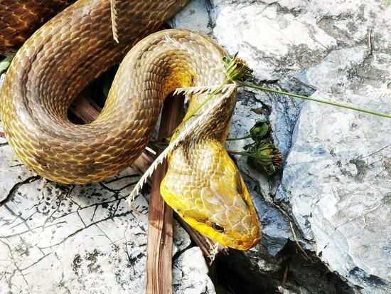 北京紫竹院公园现2米长大蛇,引游客围观!专家:这是好事啊
