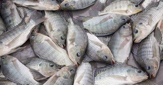肯尼亚市场上的中国鱼 图自非媒