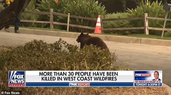 美国女记者正直播一只熊飞奔而来 结局出人意料(图)