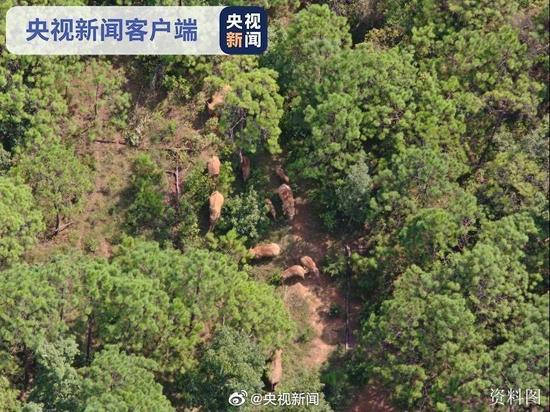 北移返程亚洲象连过三江 完全进入传统栖息地!