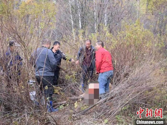 谁干的?吉林天桥岭林区一头黄牛被大型猫科动物猎杀