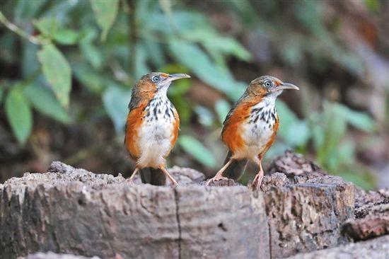 联合国最新报告给全球近十年生物多样性保护打不及格