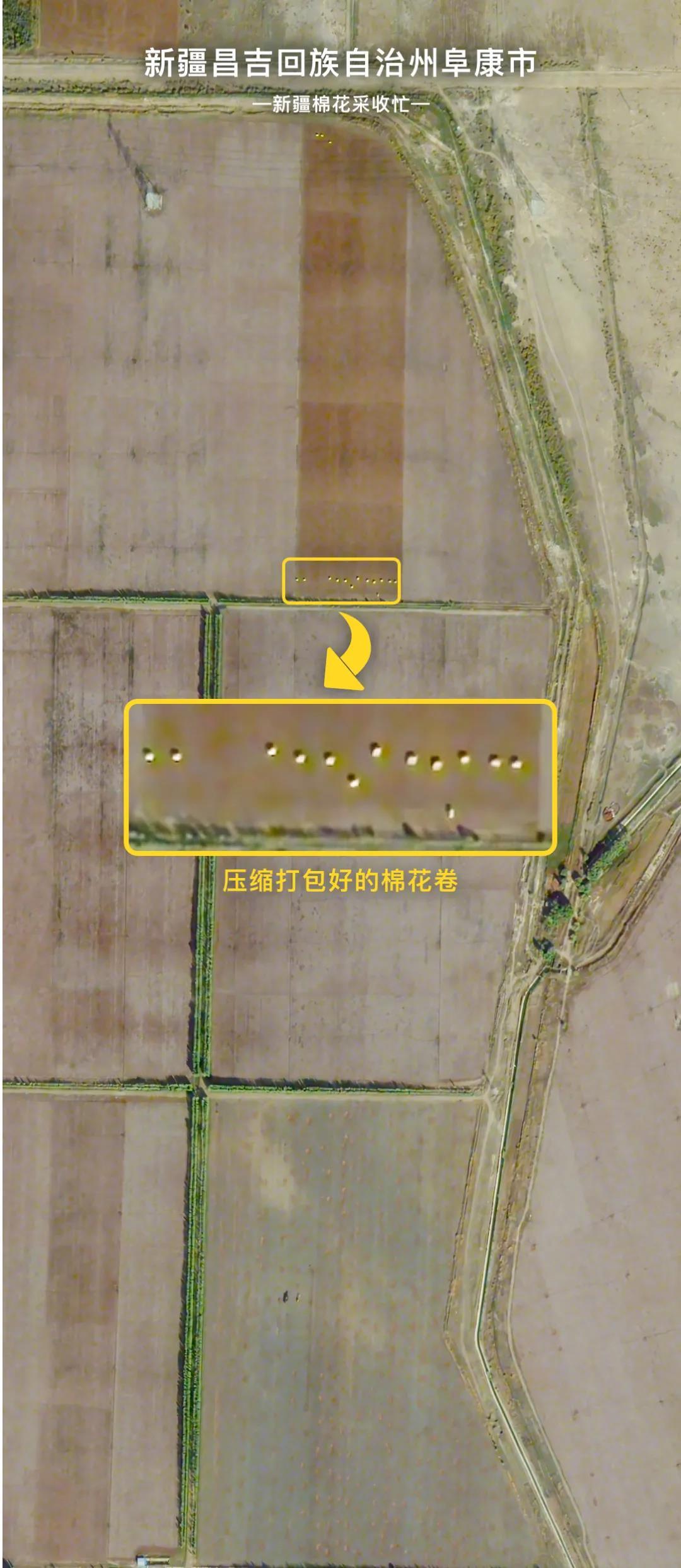 """新疆棉花大丰收啦!卫星图直击""""机械化""""现场"""