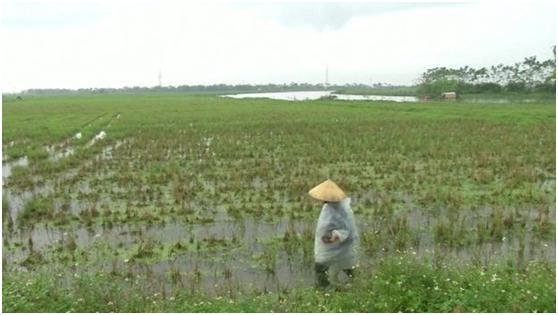 越南人偷渡英国一趟 花费约一个越南农民30年收入