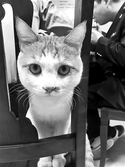 猫咪小黄在工商所