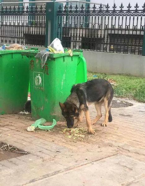 """在垃圾箱旁边的警犬""""老三"""""""