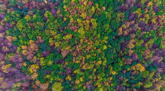 秋天的喇叭溝門原始森林,披上了彩色的衣裳