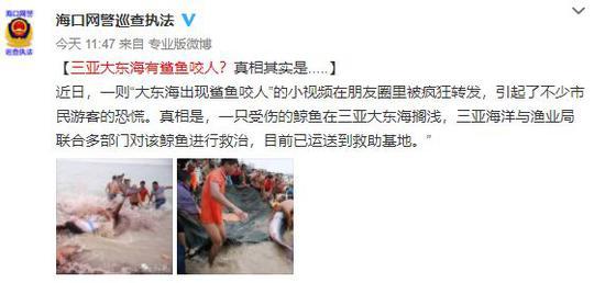 极品公子小说下载 鲨鱼闯入三亚海滩咬人?警方:实为受伤鲸鱼搁浅