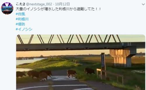 日本野豬台風天一路狂奔 為生存而戰感動網友(圖)