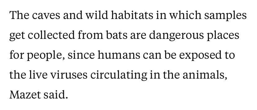 """△马泽特说:""""采集样本的洞穴和野外环境对人们来说是危险的地方,因为可能会接触到动物体内传播的活病毒。"""""""