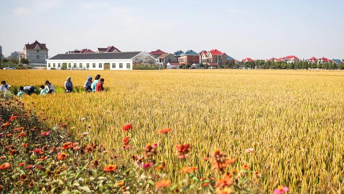 上海乡村振兴:今年推进1.27万户农民相对集中居住