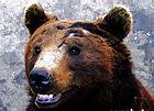 刘海洋伤熊事件结局_清华大学一学生硫酸烧伤黑熊_新闻中心_新浪网